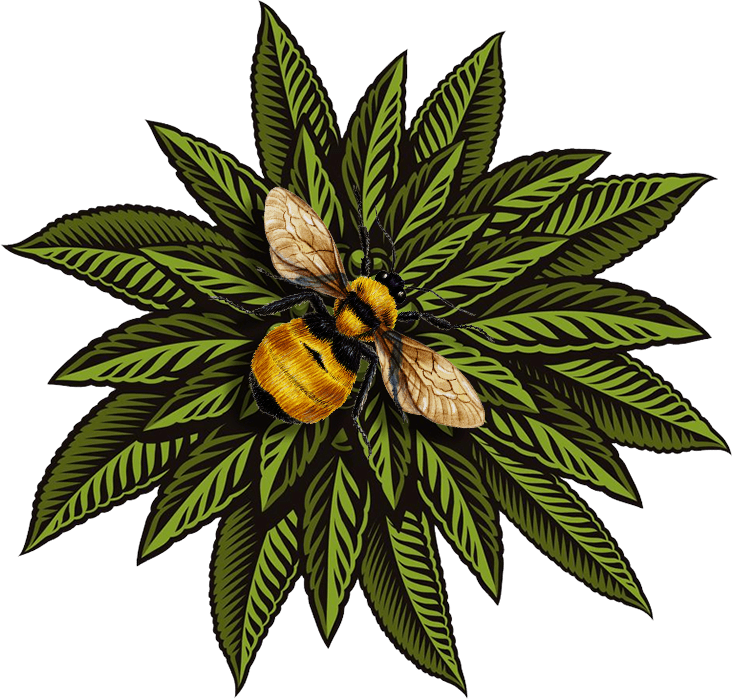 Bumble Bee Hemp Plant